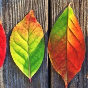Autumn Statement Key Points